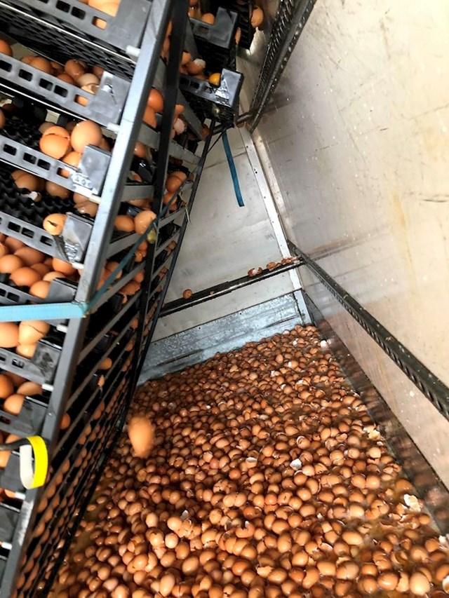 U kamionu nisu dobro pričvrstili palete s jajima te razbili više od 10 tisuća jaja.