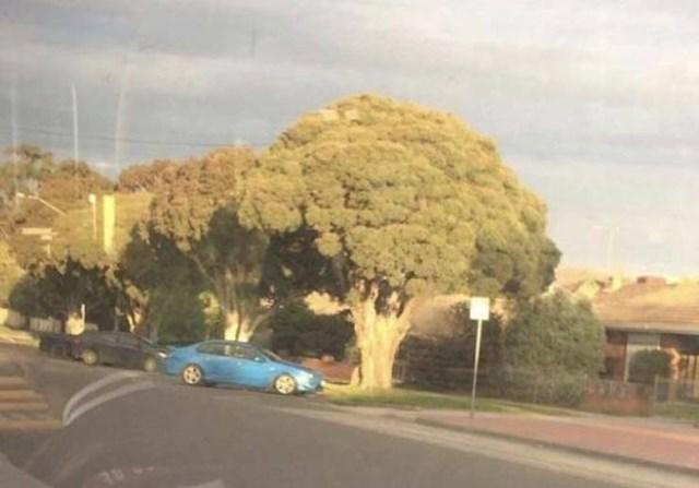 Jeste li i vi pomislili da kraj auta vidite divovsku brokulu?