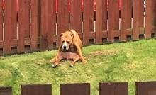 15 smiješnih slika pasa koji su se počeli čudno ponašati