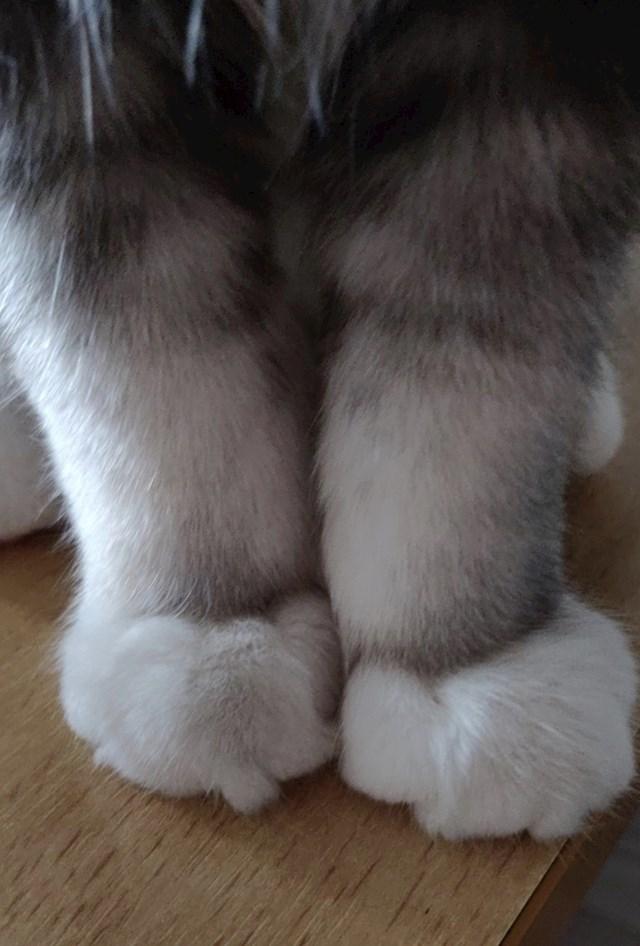 Te nogice vode do malih okruglih šapica koje biste najradije cijelo vrijeme stiskali.