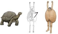 Umjetnik je otkrio kako bi ljudi izgledaju da imaju građu tijela istu kao kod nekih životinja