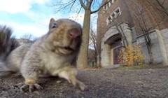 VIDEO Postavio je malu kameru kako bi snimio vjevericu, a onda dogodilo nešto neočekivano