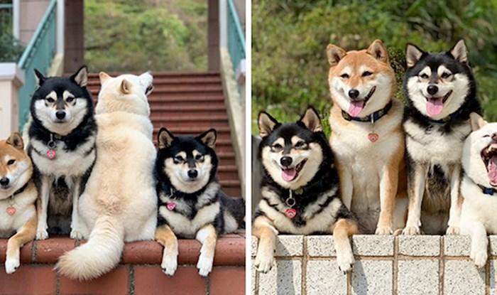 """Svijet se smije psu koji """"uništi"""" gotovo svaku grupnu fotografiju na kojoj ga uslikaju"""