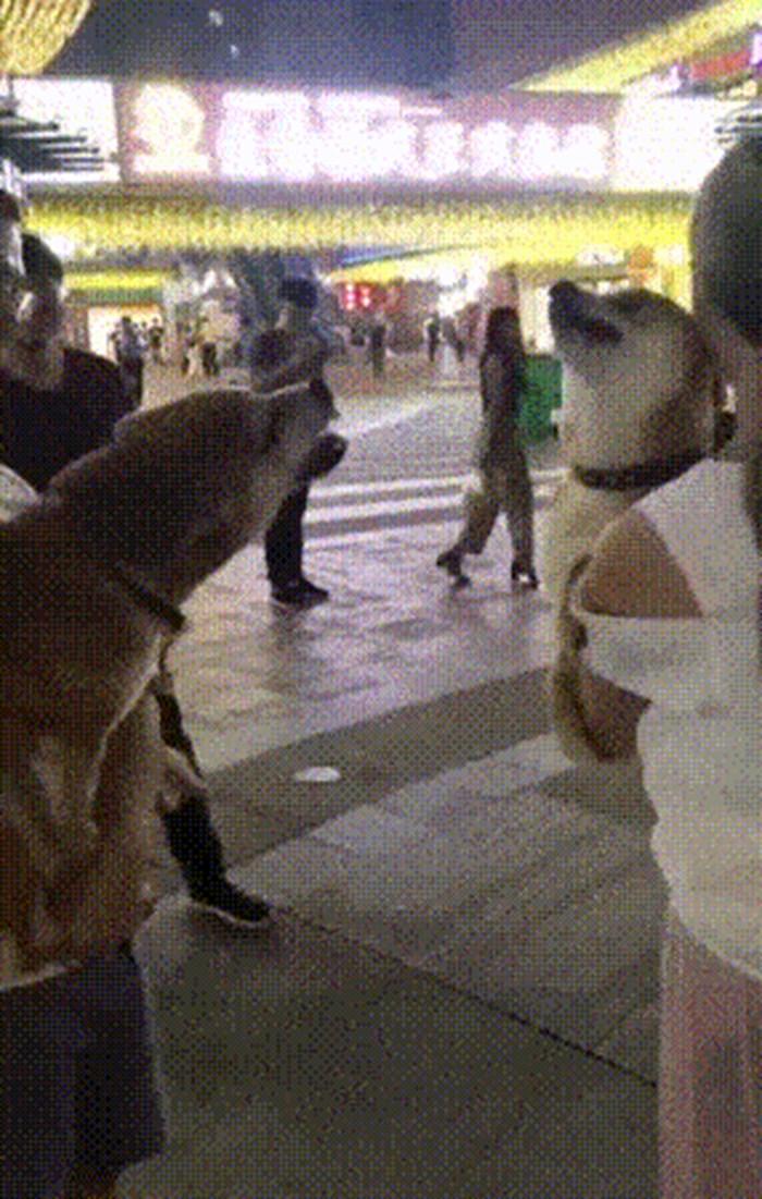 Ova snimka pasa savršeno opisuje kako funkcioniraju svađe na internetu