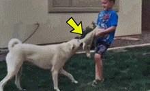 Dječak je htio psu oteti igračku, no dogodilo se nešto što nije očekivao