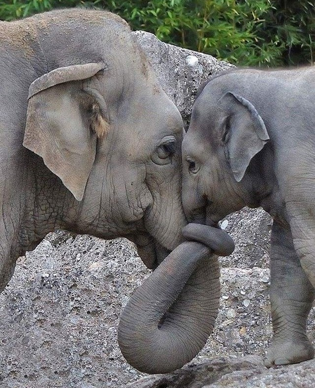 Majčinska ljubav