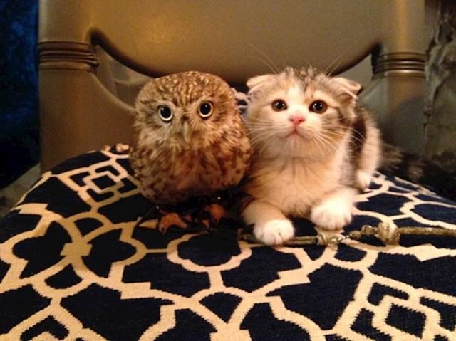 Sova se sprijateljila mačkama iz jednog japanskog kafića u gradu Osaki.