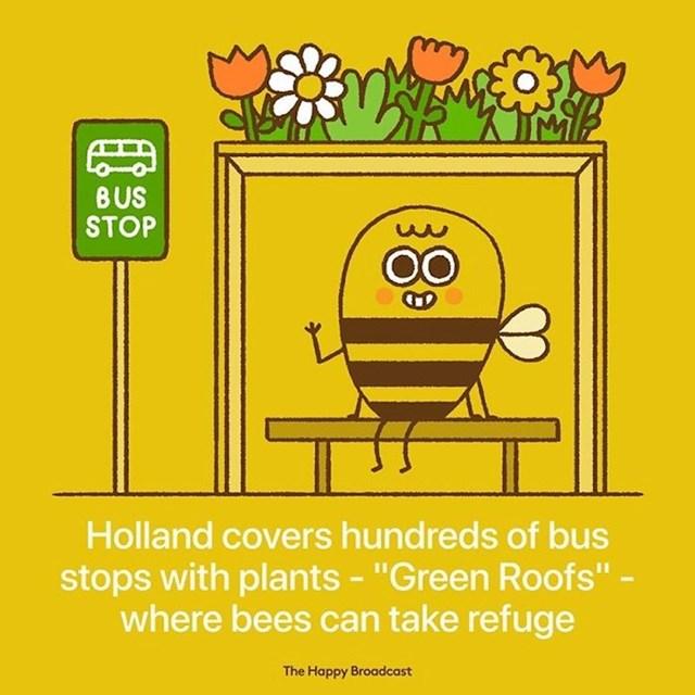 Nizozemska pokriva stotine autobusnih stanica s zelenim krovovima gdje se pčele mogu skloniti.