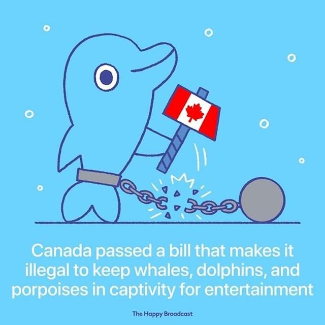 Kanada je donijela zakon kojim je postalo ilegalno držati dupine, kitove i druge morske životinje koje su se koristile u svrhu ljudske zabave.
