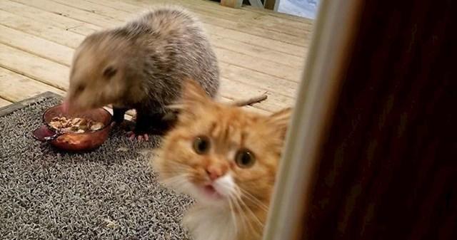 I ova maca je bila razočarana kad je vidjela što se događa...