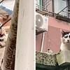Internet ima novu zvijezdu: mačku koja zbog šara izgleda kao da je konstantno tužna