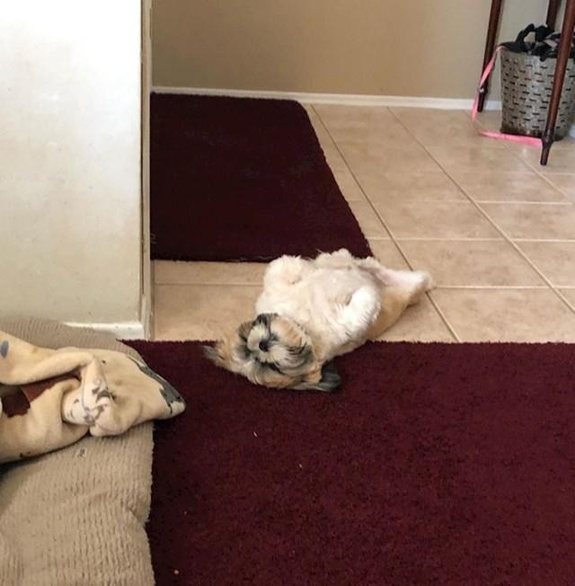 """""""Ovo je naš 8-mjesečni pas Matteo. On jako voli ležati na leđima."""""""