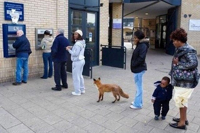 U nekim državama su životinje toliko kulturne da čekaju u redovima...