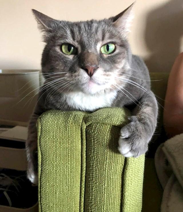 """""""Boja našeg kauča i očiju naše mačke je potpuno ista."""""""