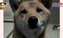 VIDEO Žena je zamolila psa da laje tiše, njegov neočekivani odgovor je nasmijao publiku