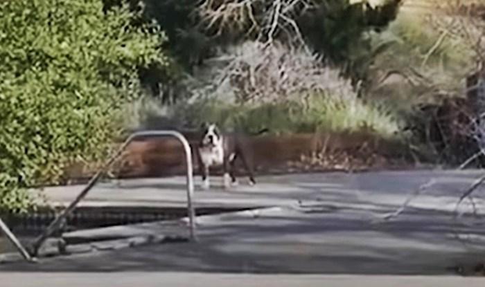 VIDEO Prijatelji su posjetili napušteni vodeni park pa shvatili zbog čega ih promatraju psi