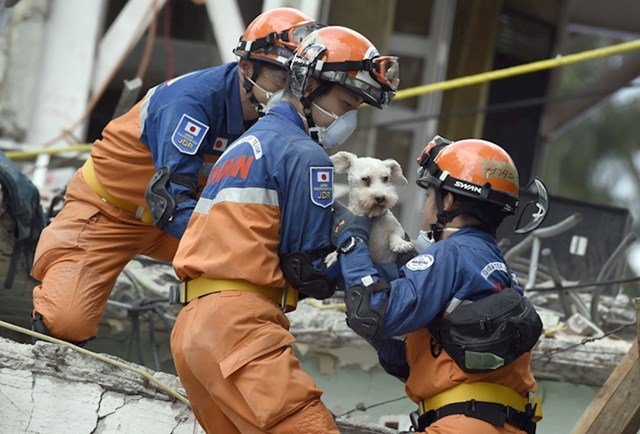 Ovaj psić je preživio potres u Meksiku. Pronašli su ga u srušenoj zgradi i spasili mu život.