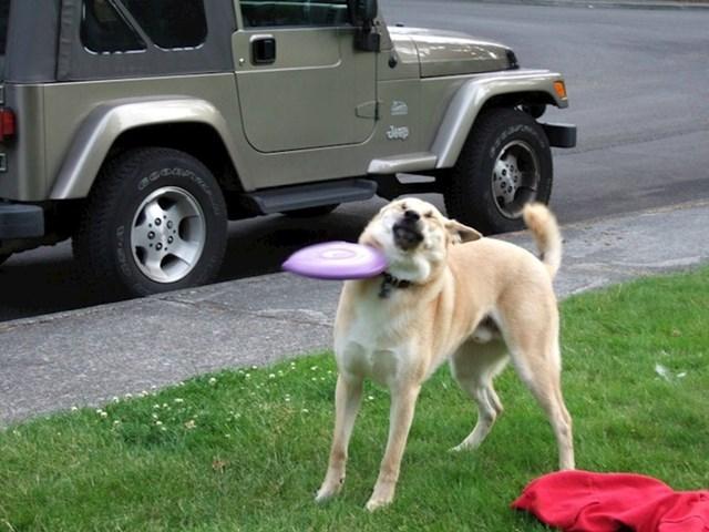 """""""Ovo je bio trenutak kad je moj pas odlučio da se ne želi više igrati s frizbijem."""""""