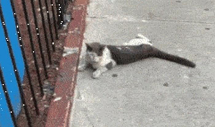 Na ulici je našao ostavljenu macu, snimio je koliko se promijenila nakon što ju je udomio