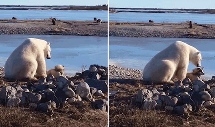 VIDEO Polarni medvjed se previše približio psu pa svojom reakcijom raznježio zabrinute vlasnike
