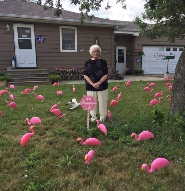 """""""Naša baka je danas proslavila 93. rođendan. Uvijek je voljela šale i podvale. Zbog toga smo odlučili postaviti 93 plamenca u njenom dvorištu. Dobro se nasmijala."""""""