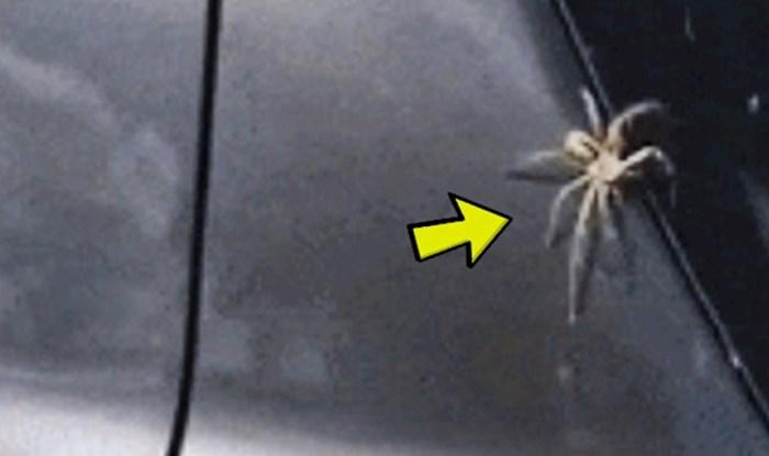 Snimao je velikog pauka, a onda se pred njegovim očima dogodilo nešto bizarno