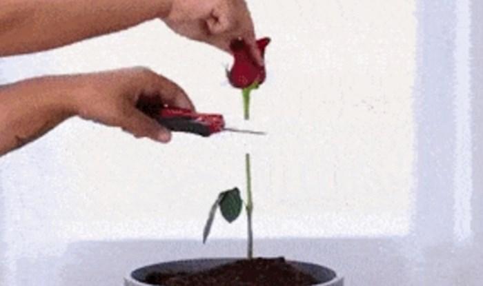 Pogledajte zanimljive trikove koje možete iskoristiti za uzgoj biljaka i cvijeća