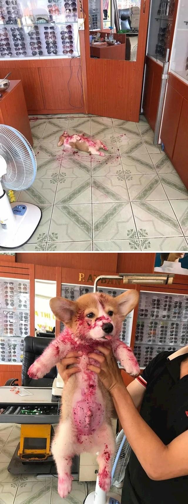 """Vlasnik je bio šokiran kad je vidio ovo, no ubrzo je shvatio da je njegov pas našao marmeladu od jagoda."""""""