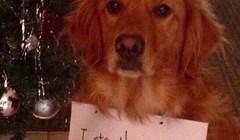 Tek su okitili božićno drvce, a onda je pas učinio nešto zbog čega su ga ocrnili na internetu