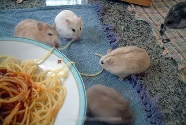 Ovi mališani su za ručak odabrali špagete.