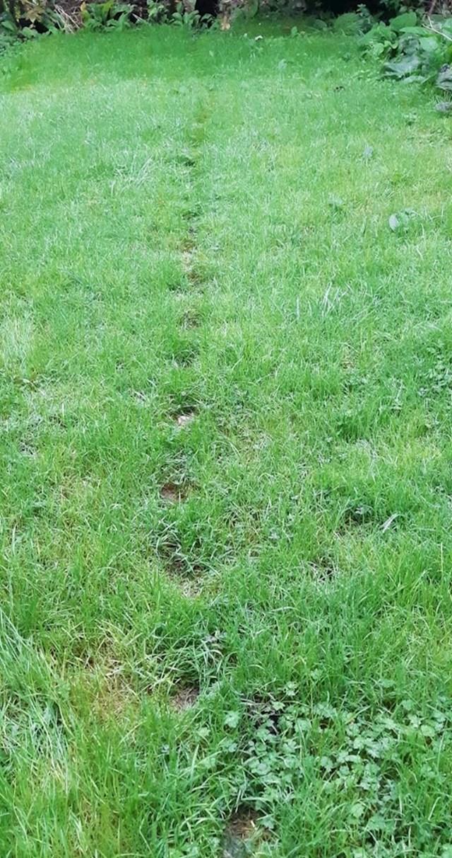"""""""Ovu stazu je napravila mačka koja je godinama hodala istim putem po dvorištu."""""""