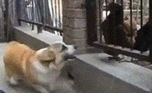 Pas je glumio facu pred kokošima, a onda su ga vlasnici stavili u neugodnu situaciju