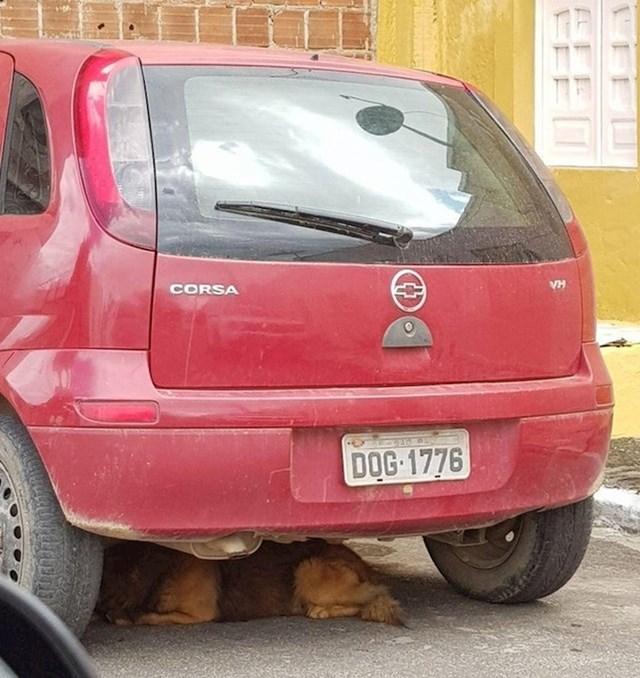 Zna li ovaj pas čitati ili se slučajno našao baš ispod ovog auta?