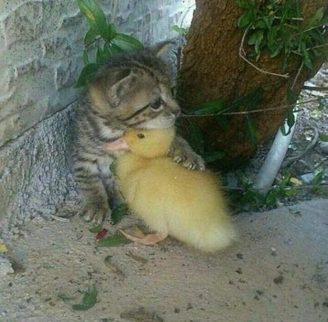 U svijetu punom mržnje i usamljenosti, lijepo je vidjeti da postoje i ovakvi prijatelji.