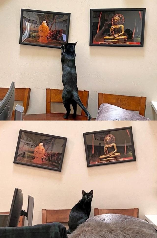 """""""Svaki put kad poravnam slike, moj mačak Stevie se popne i ispravio ono što sam 'pokvario'. Tako bar on misli."""""""