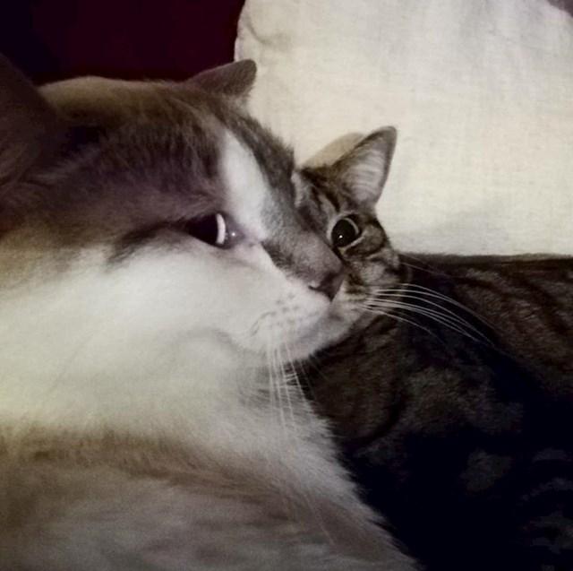 Jedna zbunjujuća slika s mačkama...