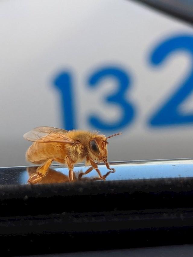 """""""Danas mi je na auto sletjela zlatna pčela."""""""