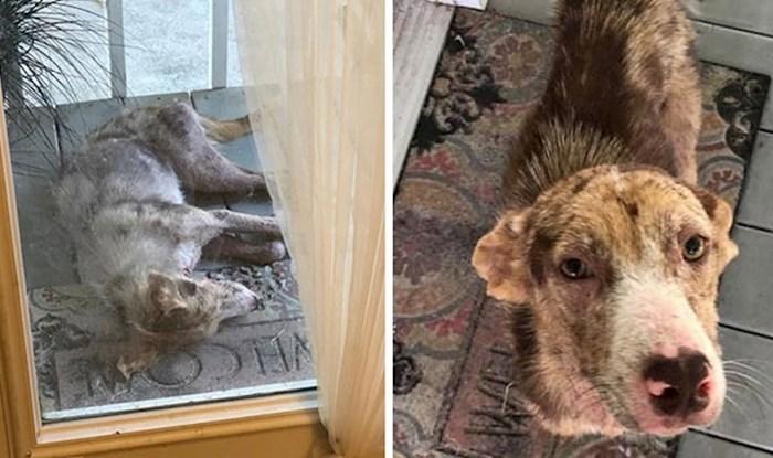 Jadni ulični pas došao se odmoriti ispred ulaznih vrata obiteljske kuće, nije više htio otići