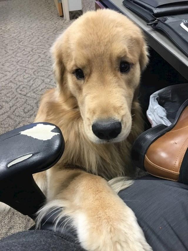 """""""U uredu imamo psa. Danas je odlučio meni praviti društvo."""""""