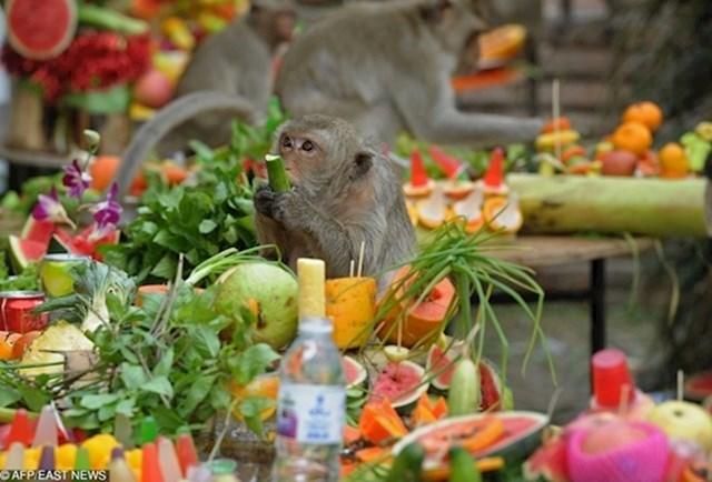 Postoji veliki festival prepun hrane organiziran samo za lokalne majmune!