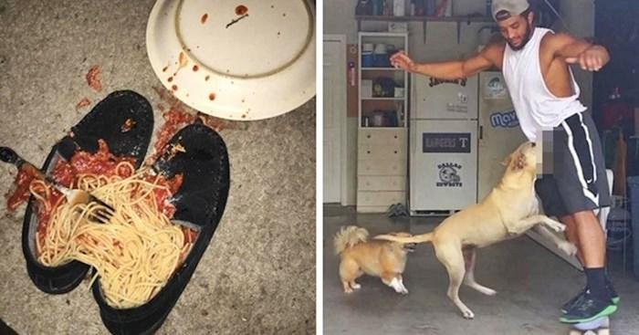 20 smiješnih slika nesretnika koji su imali jedan od najgorih dana ikad