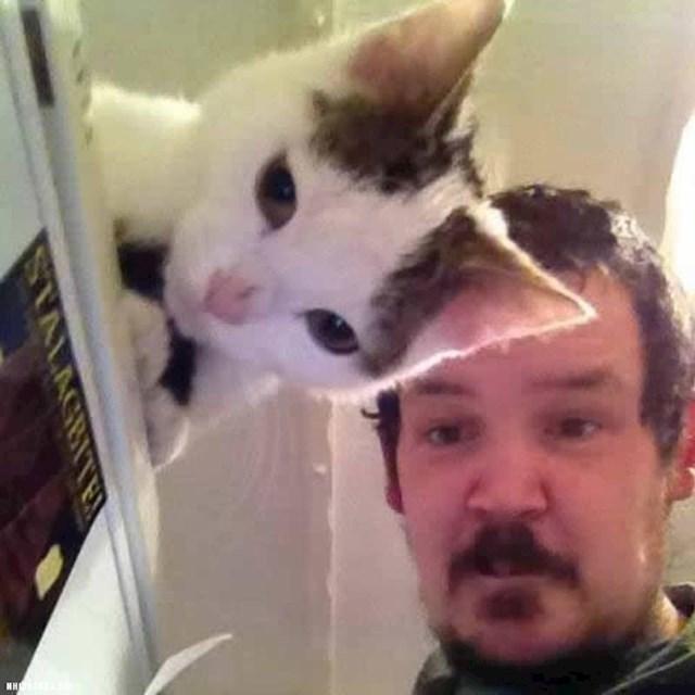 Uho ove mačke izgleda kao da je prozirno jer se savršeno uklopilo u pozadinu.