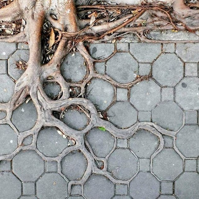 Priroda uvijek pronađe način...