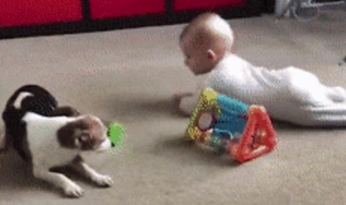 Roditelji su se počeli smijati kad su vidjeli što je pas radio dok se igrao s njihovom bebom