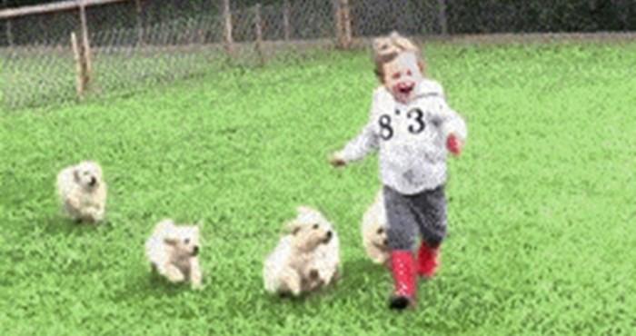 """Čopor pasa napao je malo dijete, ovakav """"napad"""" bi im svatko oprostio"""