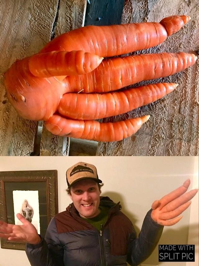 """""""Na našoj farmi smo iskopali ovu čudnu mrkvu."""""""