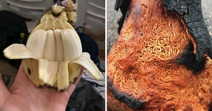 15 ljudi podijelilo je slike najzanimljivijih i najčudnijih stvari koje su vidjeli u zadnje vrijeme