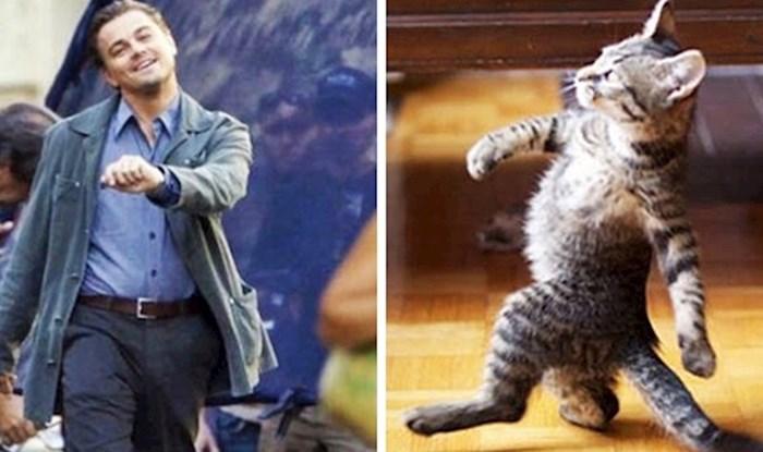15 smiješnih slika mačaka koje mogu oponašati bilo koga i bilo što