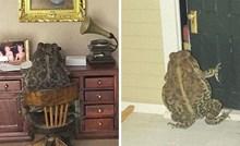 Žena slika svoju žabu ljubimicu kako se u kućici za lutke ponašao kao čovjek