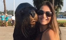 Htjela je napraviti selfie s morskim lavom, a onda ju je iznenadio svojom reakcijom